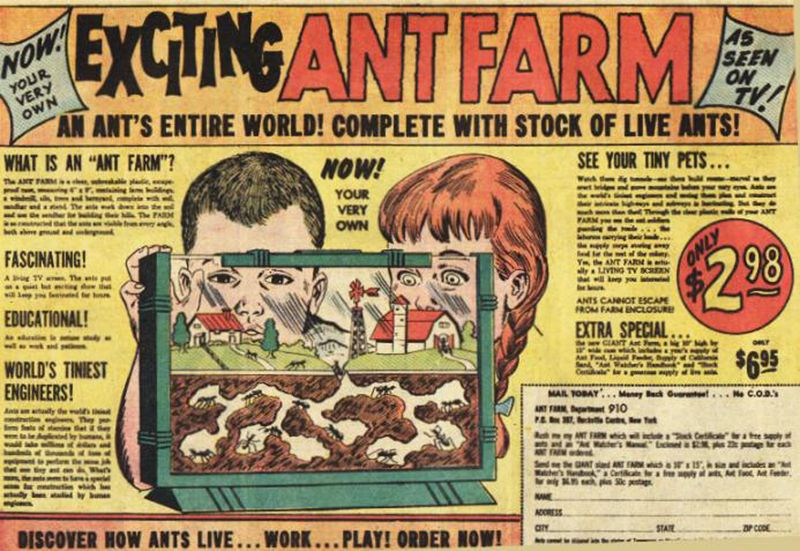 Ant farm ad
