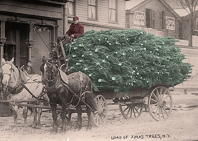 Load of Christmas Trees